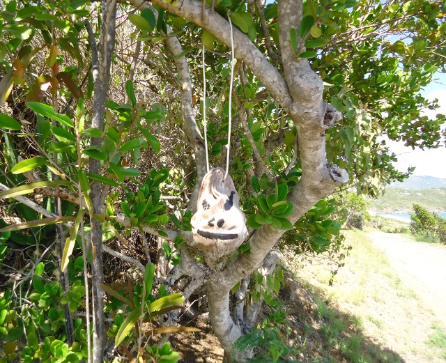 We saw a few of these coconut heads hanging around Water Island. Not sure what that was about hopefully not some voodoo thing!