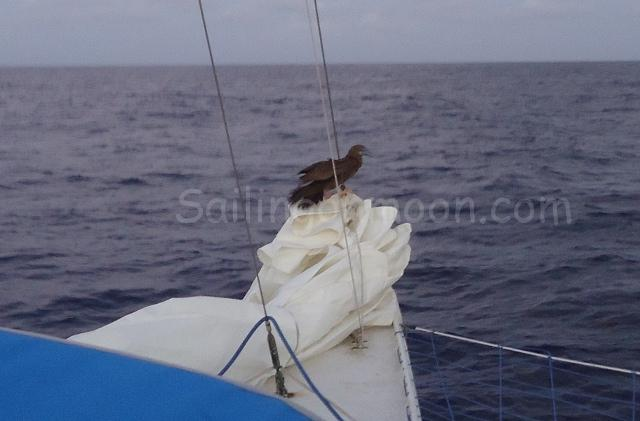 Our feathered friend taking a rest on the bow.